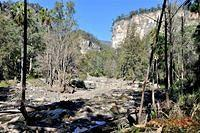 Creek in Carnarvon Gorge