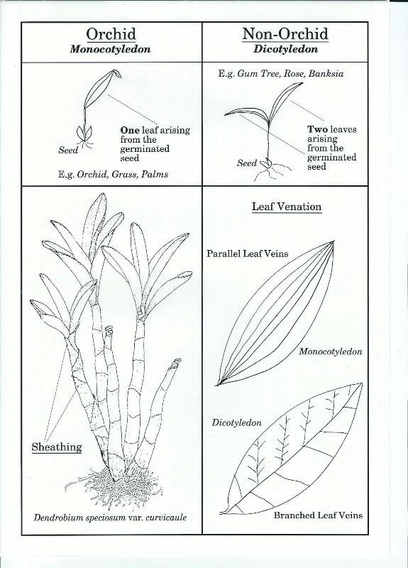 J - What makes an Orchid? - TheRockLilyMan